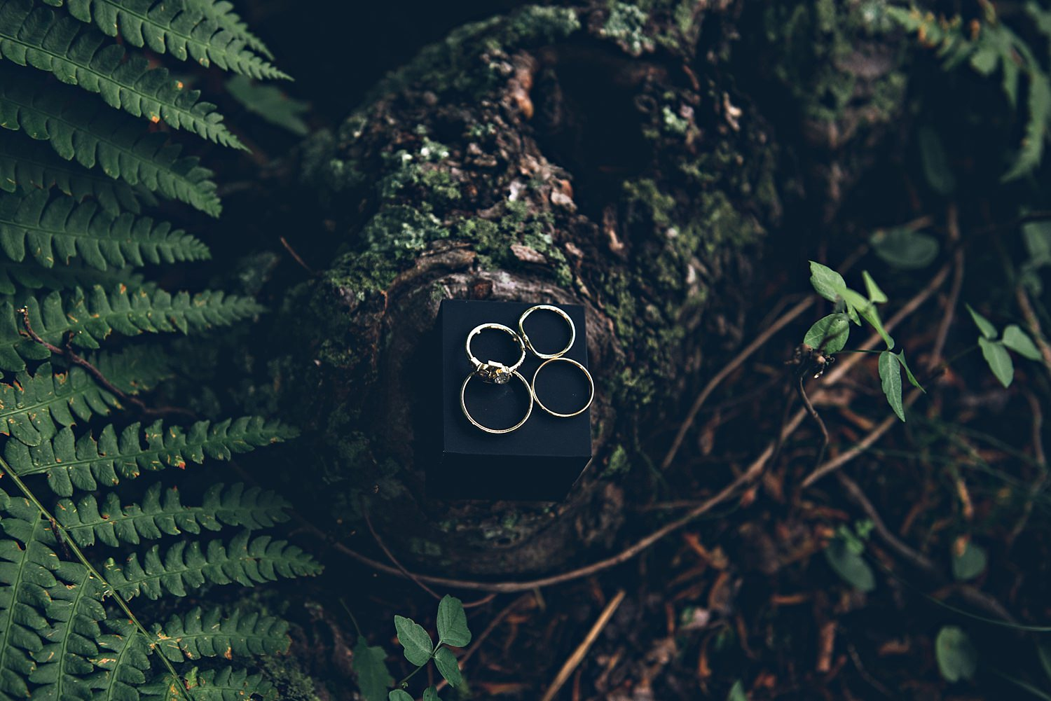 Wedding rings in nature