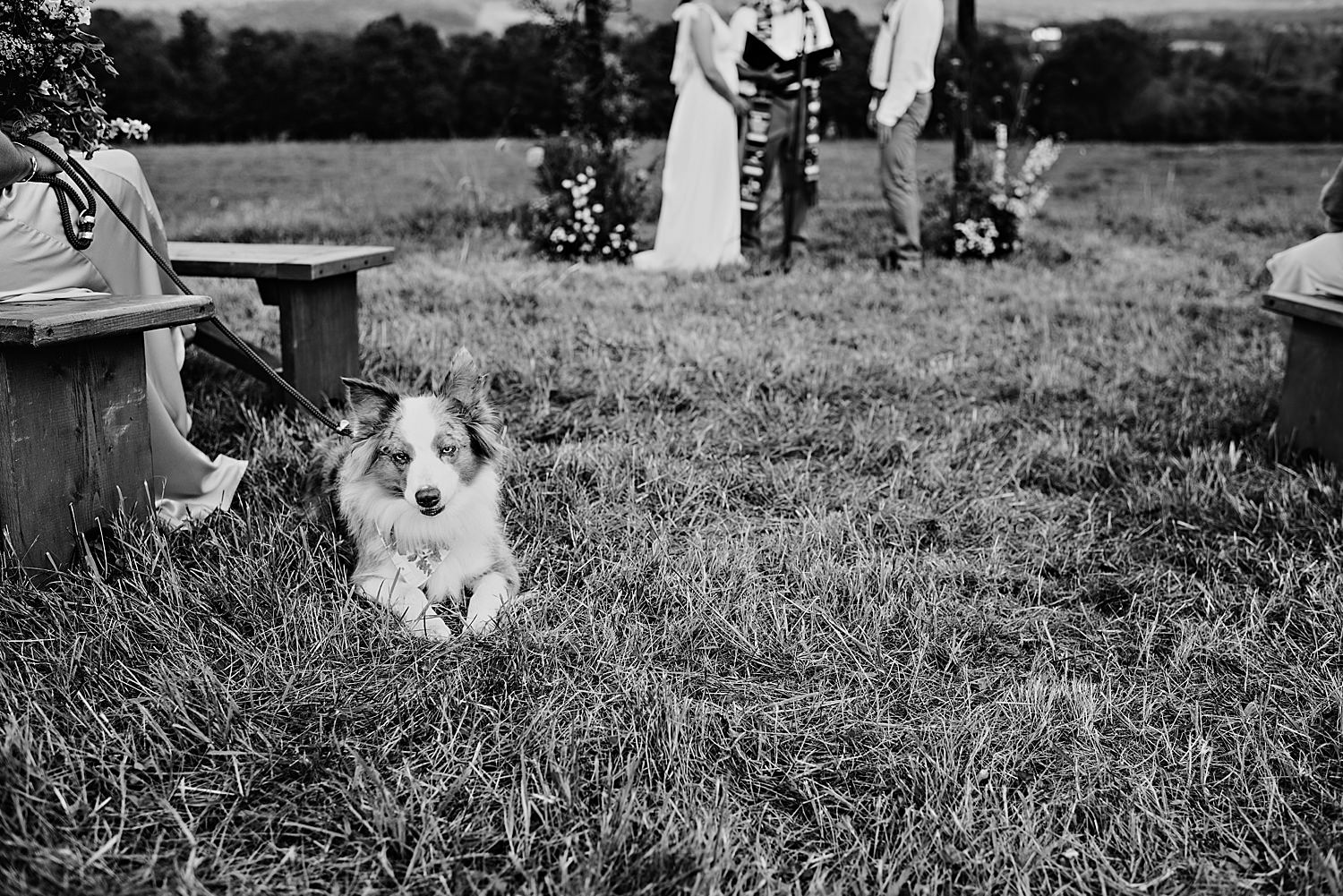 Bride and Grooms dog at the ceremony