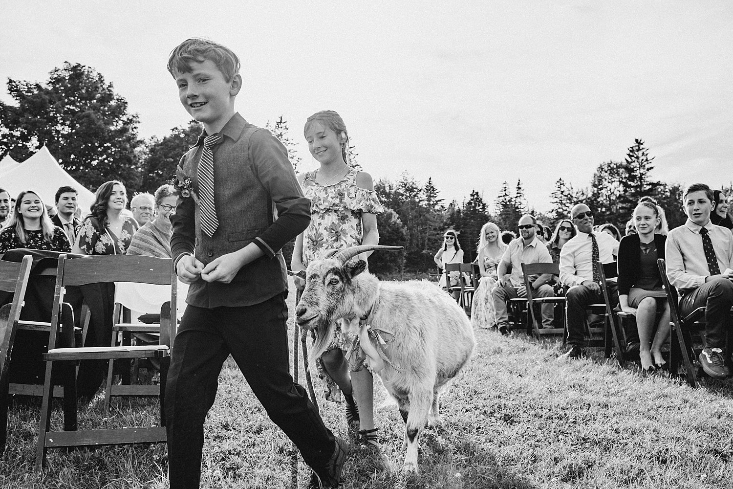 goat headed down the wedding isle